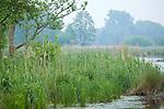 Europa, DEU, Deutschland, Nordrhein-Westfalen, Niederrhein, Nettetal, Naturpark Schwalm-Nette, Landschaft, Gewaesser, Dunst, Natur, Umwelt, Landschaft, Jahreszeiten, Stimmungen, Landschaftsfotografie, Landschaften, Landschaftsphoto, Landschaftsphotographie, <br /> <br /> [Fuer die Nutzung gelten die jeweils gueltigen Allgemeinen Liefer-und Geschaeftsbedingungen. Nutzung nur gegen Verwendungsmeldung und Nachweis. Download der AGB unter http://www.image-box.com oder werden auf Anfrage zugesendet. Freigabe ist vorher erforderlich. Jede Nutzung des Fotos ist honorarpflichtig gemaess derzeit gueltiger MFM Liste - Kontakt, Uwe Schmid-Fotografie, Duisburg, Tel. (+49).2065.677997, ..archiv@image-box.com, www.image-box.com]