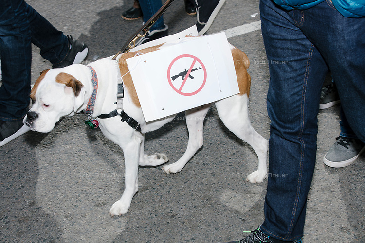 A dog wears an anti-gun sign in the March For Our Lives protest, walking from Roxbury Crossing to Boston Common, in Boston, Massachusetts, USA, on Sat., March 24, 2018, in response to recent school gun violence.