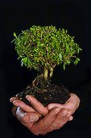 Un albero tra le mani a simboleggiare la tutela e protezione ambientale..A tree in his hands to symbolize the environmental protection..