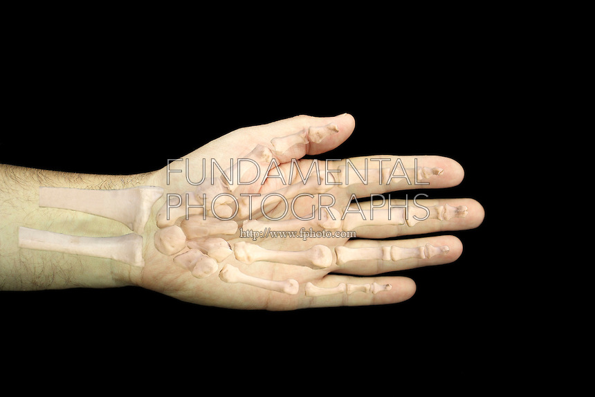 SKELETAL STRUCTURES<br />