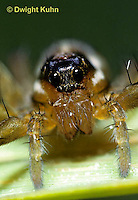 LC02-009a  Wolf Spider - face and eyes - Pardosa distincta