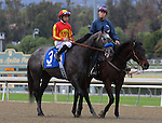 Midnight Hawk and Mike Smith in the post parade before the Grade 2 Robert B. Lewis Stakes at Santa Anita Park in Arcadia, California on February 8, 2014. (Zoe Metz/ Eclipse Sportswire)