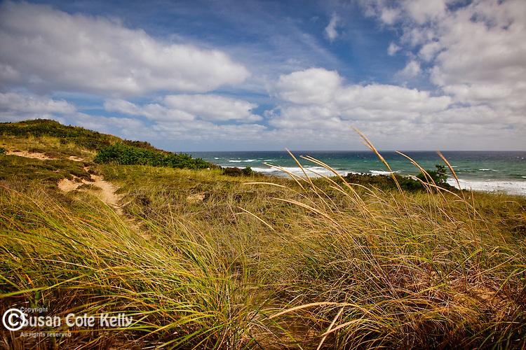 Beach Grass at White Crest Beach, Wellfleet, Cape Cod, MA, USA