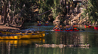 Fine Art Landscape Photograph of canoeists paddling down the river Jordan near Haifa, Israel.