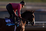 October 28, 2019 : Breeders' Cup Juvenile Turf entrant Graceful Kitten, trained by Amador Merei Sanchez, exercises in preparation for the Breeders' Cup World Championships at Santa Anita Park in Arcadia, California on October 28, 2019. Carolyn Simancik/Eclipse Sportswire/Breeders' Cup/CSM