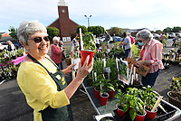 HOW DOES YOUR GARDEN GROW?<br />Sue Mank with the Garden Club of Rogers looks at a pepper plant on Saturday May 1 2021 while helping customers at the club's 45th annual  plant sale. Members sold an array of flowers, vegetable plants, trees and shrubs in the parking area at First Presbyterian Church in Rogers. The club maintains a variety of public gardens around Rogers, including the butterfly garden at Railyard Park downtown. Profits fund garden maintenance and other club service projects, said Marge Leanord, club president. The Garden Club of Rogers has 70 men and women members and recently marked its 90th anniversary. Members meet monthly, except January, July and August, to hear programs, share gardening tips and take garden tours. Go to nwaonline.com/210502Daily/ to see more photos.<br />(NWA Democrat-Gazette/Flip Putthoff)