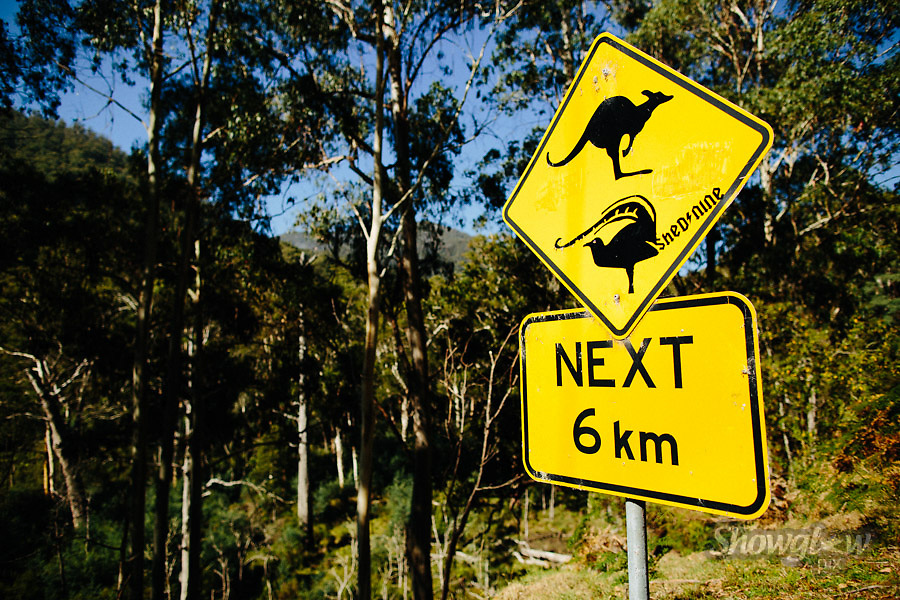 Image Ref: HC108<br /> Location: Mt Buller Tourists Rd, Mt Buller<br /> Date: 21 March, 2015