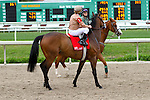 February 21, 2015: Glenard with James Graham up at the Fairgrounds Handicap at the New Orleans Fairgrounds Risen Star Stakes Day. Steve Dalmado/ESW/CSM