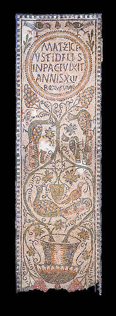 The Christian memorial funerary mosaic of Matziceus, a Libyan, with the inscription reading: 'the faithful Matziceus lived in peace for 42 years, rested (died) on the fifteenth of the calends of June'.<br /> <br /> The panel is decorated with vines which grow out of a cantharus, a Greek style drinking cup, which represents the fountain of life.<br /> <br /> 5th century Eastern Byzantine Roman mosaic from the Parish church of Demna, left AisleBardo Museum, Tunis, Tunisia. Black background