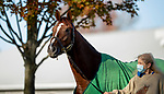 November 3, 2020: Channel Maker, trained by trainer William I. Mott, exercises in preparation for the Breeders' Cup Turf at Keeneland Racetrack in Lexington, Kentucky on November 3, 2020. Alex Evers/Eclipse Sportswire/Breeders Cup
