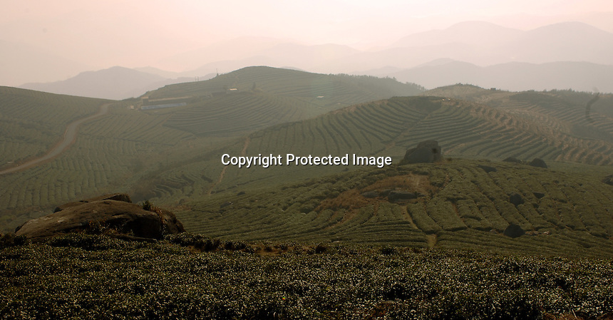 "The Heng Yuan Chun Tea Farm in the mountains outside Fuding City, Fujian Province where ""Silver Tip"" tea is produced.  Workers here are paid around 53 pounds a month during harvest season. The tea sells for upto 20 pounds a pot in the UK."