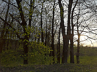 FOREST_LOCATION_90219