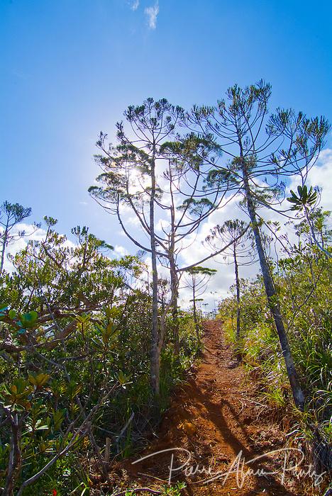 sentier de grande randonnée du Pic du Pin