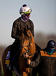 November 3, 2020: Dunbar Road, trained by trainer Chad C. Brown, exercises in preparation for the Breeders' Cup Distaff at Keeneland Racetrack in Lexington, Kentucky on November 3, 2020. Alex Evers/Eclipse Sportswire/Breeders Cup