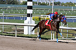 Social Inclusion with jockey Luis Contreras on board wins his allowance race over favorite Honor Code and breaks track record at Gulfstream Park, Hallandale Beach, Florida 03-12-2014