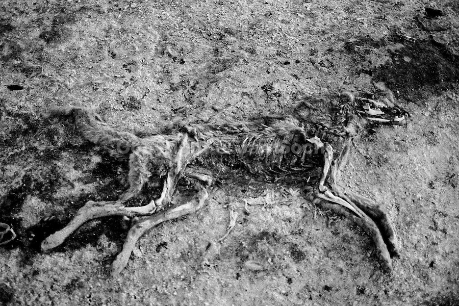 A carcass of a dead dog naturally decomposes on the ground in the cold Altiplano mountain plateau, close to Oruro, Bolivia, 15 July 2002.