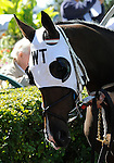 09 September 19: Show Me the Ring prior to the grade 3 Natalma Stakes for two year old fillies at Woodbine Racetrack in Rexdale, Ontario.