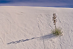 Images from White Sands National Monument in New Mexico.