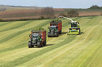 7.5.2021 Chopping grass silage in Cambridgeshire <br /> ©Tim Scrivener Photographer 07850 303986<br />      ....Covering Agriculture In The UK....
