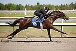 #75Fasig-Tipton Florida Sale,Under Tack Show. Palm Meadows Florida 03-23-2012 Arron Haggart/Eclipse Sportswire.