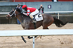 March 14, 2020: Night Ops (2) with jockey Joseph Talamo aboard before crossing the Essex Handicap at Oaklawn Racing Casino Resort in Hot Springs, Arkansas on March 14, 2020. Justin Manning/Eclipse Sportswire/CSM