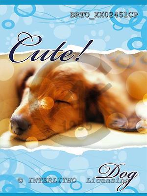Alfredo, ANIMALS, dogs, photos+++++,BRTOXX02451CP,#a# Hunde, perros
