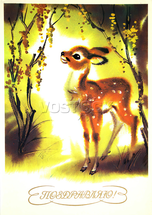 Postcard printed in the USSR shows fawn, 1950