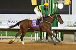February 19, 2021: MOTAWARIYAH #13 gives jockey Shane Foley a quick fire double taking the lead on International Jockeys Challenge Day, King Abdulaziz Racecourse, Riyadh, Saudi Arabia. Shamela Hanley/Eclipse Sportswire/