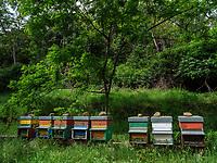 Bienenstöcke bei  San Lorenzo, Elba, Region Toskana, Provinz Livorno, Italien, Europa<br /> beehives near  San Lorenzo, Elba, Region Tuscany, Province Livorno, Italy, Europe