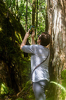 A woman takes a photo with her cell phone at Kalopa State Park, Hamakua district of the Big Island.