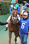February 22, 2015: #6 Far Right with jockey Mike Smith aboard coming from the paddock area at Oaklawn Park in Hot Springs, AR. Justin Manning/ESW/CSM