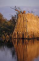 Europe/France/Pays de la Loire/44/Loire-Atlantique/Parc Naturel Régional de Brière/Marais: Chasseur tapis dans sa loge  // France, Loire Atlantique, Briere Regional Natural Park, marsh, hunter hidden in his hiding place