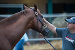 DEL MAR,CA-AUGUST 19: California Chrome and his assistant trainer,Alan Sherman, at Del Mar Race Track on August 17,2016 in Del Mar,California (Photo by Kaz Ishida/Eclipse Sportswire/Getty Images)