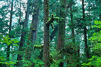 Temperate Rain Forest near Long Beach in Pacific Rim National Park, British Columbia, Canada.