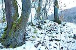 Europa, DEU, Deutschland, Baden-Wuerttemberg, Landkreis Reutlingen, Goenningen, Schwaebische Alb, Albtrauf, Wiesaztal, Typische Landschaft, Natur, Umwelt, Landschaft, Jahreszeiten, Stimmungen, Landschaftsfotografie, Landschaften, Landschaftsphoto, Landschaftsphotographie, Wetter, Wetterelemente, Wetterlage, Wetterkunde, Witterung, Witterungsbedingungen, Wettererscheinungen, Meteorologie, Wettervorhersage, <br /> <br /> [Fuer die Nutzung gelten die jeweils gueltigen Allgemeinen Liefer-und Geschaeftsbedingungen. Nutzung nur gegen Verwendungsmeldung und Nachweis. Download der AGB unter http://www.image-box.com oder werden auf Anfrage zugesendet. Freigabe ist vorher erforderlich. Jede Nutzung des Fotos ist honorarpflichtig gemaess derzeit gueltiger MFM Liste - Kontakt, Uwe Schmid-Fotografie, Duisburg, Tel. (+49).2065.677997, ..archiv@image-box.com, www.image-box.com]