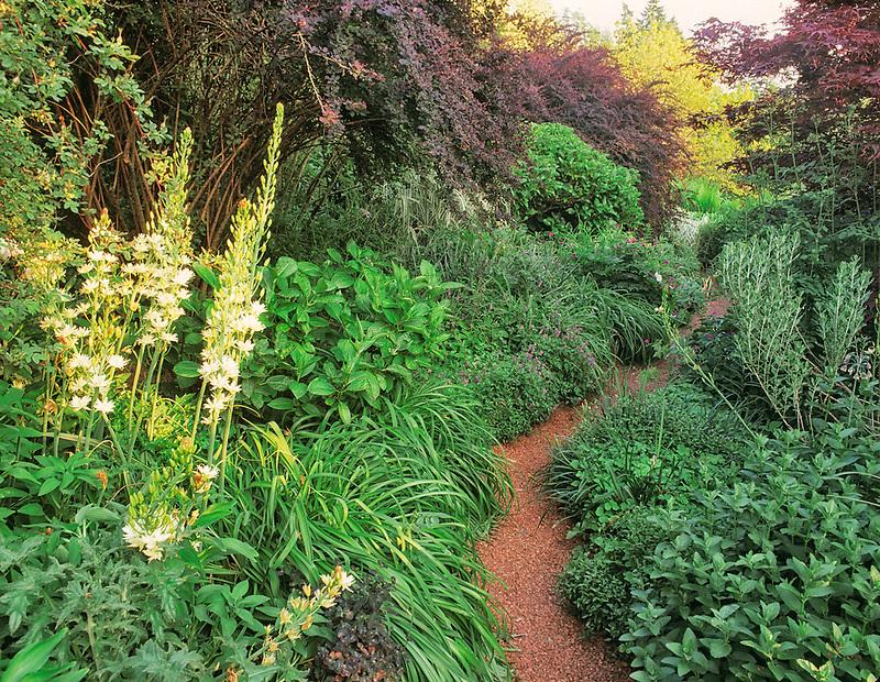"""Path in """"Perenial Border"""".Bellevue Botanical Garden, Bellevue, Washington"""