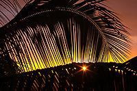 Sunset and palm frond, Kailua Kona The Big Island of Hawaii, Pacific Ocean