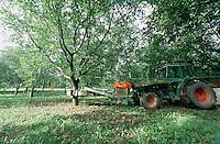 Vibreur, ramassage mécanisé des noix.Station exprimentale de Creysse.Noix du Périgord.46-Lot.France