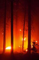 Prescribed fire burns at night lighting up trunks of ponderosa pins