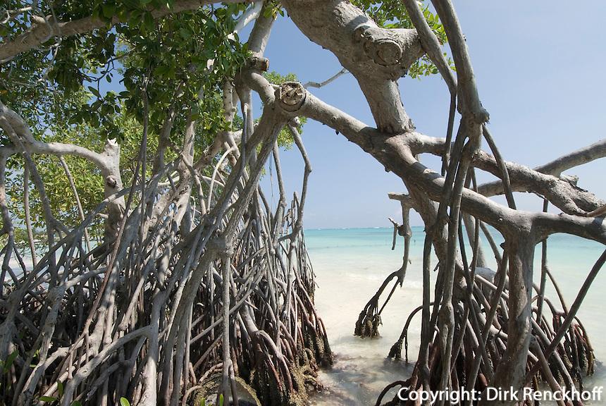 Dominikanische Republik, Mangroven im Punta Cana Beach Resort und Club