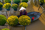 Workers on boats tend to chrysanthemums being grown in a 'flower village'.  The flowers are planted above water to avoid damage from frequent flooding in the region.<br /> <br /> When the chrysanthemum indicums have bloomed, they will be taken to nearby cities for sale.  The photos were taken by Trung Anh, at the Sa Dec flower village in the Mekong Delta region of Vietnam.  SEE OUR COPY FOR DETAILS.<br /> <br /> Please byline: Trung Anh/Solent News<br /> <br /> © Trung Anh/Solent News & Photo Agency<br /> UK +44 (0) 2380 458800