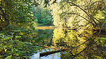 Early rainforest fall color reflects in a back water of Lake Sylvia, near Montesano, Wa.  Lake Sylvia State Park