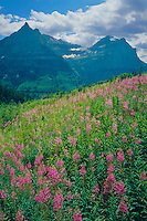 Mt. Oberlin and Mt. Cannon<br /> Fireweed on the Garden Wall<br /> Glacier National Park<br /> Rocky Mountains,  Montana