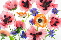 Close up of poppy flower display.
