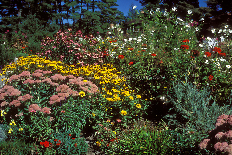 "Autumn border"" Sedum Autumn Joy aka Herbstfreude, Aster novi-belgii Royal Opal, Physotegia, Helianthus multiflorus 'Flore Pleno', Silver King Artemisia"