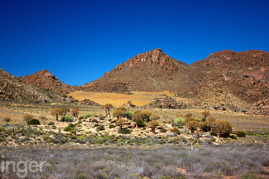 Goegap Nature and Wildflower Reserve, Namaqualand, South Africa