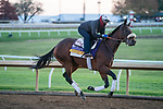 November 5, 2020: Harvest Moon, trained by trainer Simon Callaghan, exercises in preparation for the Breeders' Cup Distaff at Keeneland Racetrack in Lexington, Kentucky on November 5, 2020. Scott Serio/Eclipse Sportswire/Breeders Cup/CSM