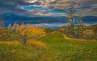 Fine Art Vineyard Scenic of the orchards and vineyards that are overlooking Okanagan Lake in BC, Canada.