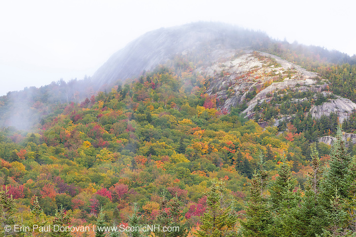 Forest along Zealand Road in the White Mountains, New Hampshire USA during the autumn months