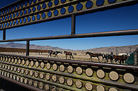 Palomino Valley where wild horses are taken by the BLM when gathered.  They are processed and sent to other facilities or cared for until adopted or they live out their lives at the center.